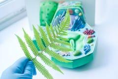 有式样植物细胞的植物叶子 免版税库存照片