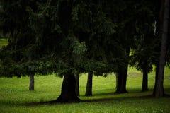 有强大绿色树的美丽的公园 免版税图库摄影