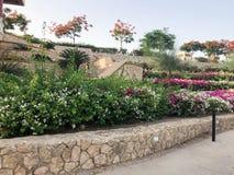 有很多明亮的多彩多姿的开花的花的,花圃一个美好的颜色多重庭院计划了与一块老石头a 库存照片