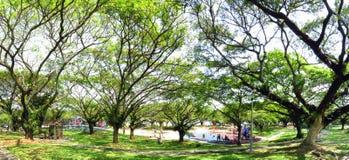 有很多树和儿童操场的绿色庭院 免版税库存图片