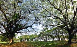 有很多树的绿色庭院您的monring的步行 库存照片