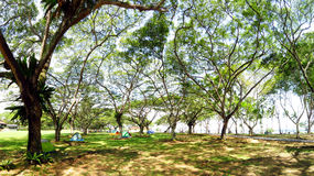有很多树的绿色庭院野营的 免版税库存照片