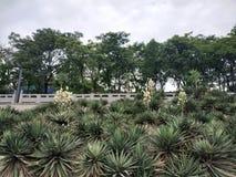 有很多白花的绿色和多刺的植物在中部 免版税图库摄影
