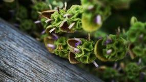 有微小的紫色和白花的鲜绿色植物 免版税库存图片