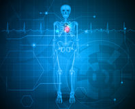 有心脏的人的骨骼 向量例证