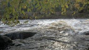 有急流的河在秋天森林里 股票录像