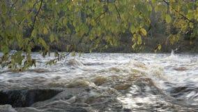 有急流的河在秋天森林里 影视素材