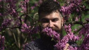 有情感面孔的年轻英俊的有胡子的人在灌木淡紫色花,特写镜头附近 成人滑稽的人面孔鬼脸围拢了 股票视频