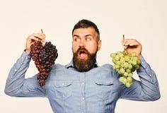 有惊奇的面孔的种葡萄并酿酒的人拿着葡萄 免版税库存照片