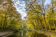 有成熟山毛榉树的森林在古国庄园Groenendaal 免版税库存图片