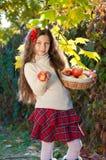 有成熟苹果篮子的逗人喜爱的女孩  库存图片