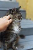 有户外猫的少妇 免版税库存图片