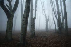 有扭转的树的可怕被困扰的万圣夜森林 库存照片