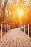 有扶手栏杆的一条木人行道在反对被定调子的橙色阳光的秋天森林里 免版税库存图片
