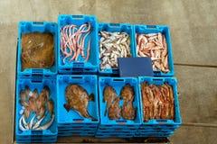有抓住的容器,海鱼纤巧,西班牙 库存照片