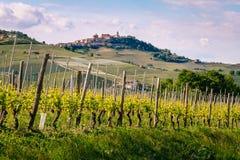 有拉莫拉村庄的葡萄园在小山的上面 从巴罗洛的看法春天 葡萄栽培,Langhe,山麓,意大利, 免版税库存照片