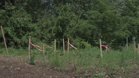 有拍动在风的桃红色丝带的木岗位 股票录像