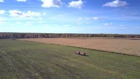 有拖车驱动的鸟瞰图卡车沿麦地 股票视频