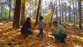 有拾起黄色叶子的孩子的年轻家庭 股票视频