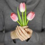 有拿着桃红色春天的完善的钉子艺术的妇女手开花郁金香,肉欲的演播室射击 免版税库存照片
