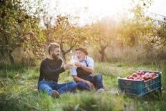 有拿着瓶用萍果汁的成人儿子的一名老人在苹果树在秋天 免版税库存图片