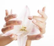 有拿着花的修指甲的秀丽精美手 库存图片