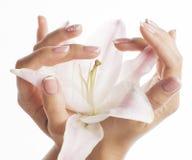 有拿着花的修指甲的秀丽精美手 免版税库存图片