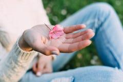 有拿着苹果树的中立修指甲的女性手变粉红色花 户外,春天 免版税库存图片