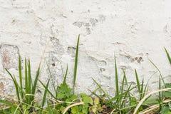 有损坏的膏药层数的白色墙壁,在前面生长罕见的绿草 免版税库存图片