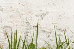 有损坏的膏药层数的白色墙壁,在前面生长罕见的绿草 免版税库存照片
