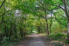 有排行在艾塞克斯,英国的树的森林道路 免版税库存照片