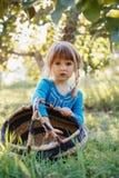 有摘苹果的蓝眼睛的逗人喜爱的可爱的矮小的红发白种人女孩孩子在农场的庭院里 免版税库存照片
