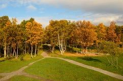 有操场摇摆集合和供徒步旅行的小道的充满活力的秋天森林 库存照片