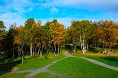 有操场摇摆集合和供徒步旅行的小道的充满活力的秋天森林 免版税库存图片