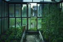 有收获的温室在雨以后 库存照片