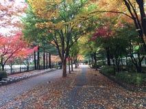 有改变的颜色的秋天路 库存照片