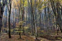 有改变肤色的叶子的秋天森林 免版税库存照片