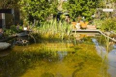 有放松的长凳和一点池塘的美丽的庭院 免版税库存照片