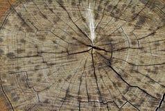 有效地被构造的切片一个老树桩 免版税库存照片