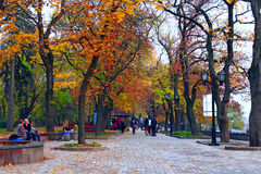 有散步道路和大树的秋季公园 库存图片
