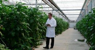 有数字片剂审查的植物的科学家自温室4k 股票视频