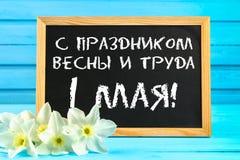 有文本的黑板用俄语:假日春天和劳方, 5月1日 黄水仙白花在一蓝色木tabl的 库存图片