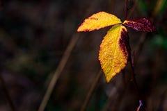 有文本空间的死的秋天叶子 库存照片
