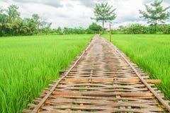 有新绿色米领域的竹在有雾的山的走道和五谷 图库摄影