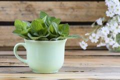 有新鲜和绿色蜜蜂花banch的绿色杯子  免版税库存图片