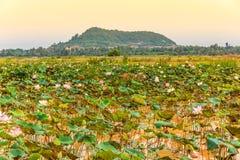 有新鲜的莲花的池塘和绿色叶子俯视Mounta 免版税库存照片