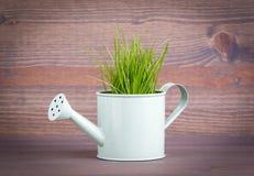 有新鲜的绿色春天草的微型喷壶 事务和发展的抽象背景 图库摄影