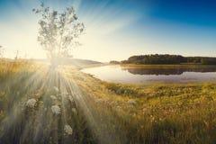 有新鲜的绿草的意想不到的有雾的河在阳光下 太阳射线通过树剧烈的五颜六色的风景 例证百合红色样式葡萄酒 免版税库存照片