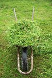 有新鲜的绿草的独轮车 免版税库存照片