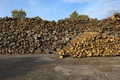 有日志堆的木围场 库存图片